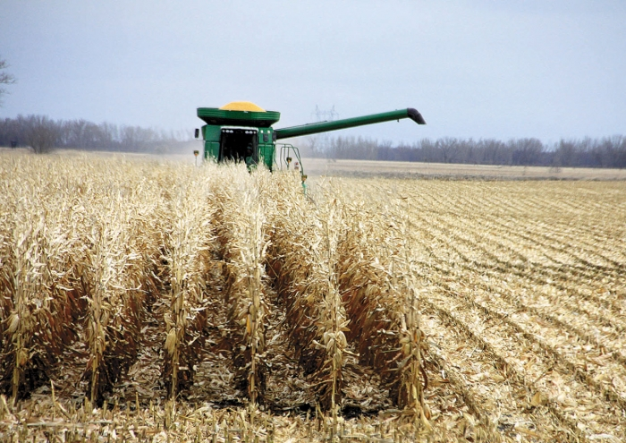 Minnesota's corn harvest is 15 days behind the five-year average and 12 days behind last year. Just 38 percent of the crop has been taken in, though with each passing day farmers are making considerable progress.