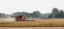 Minnesota's soybean harvest is underway more than a week ahead of average thanks to a very warm growing season.
